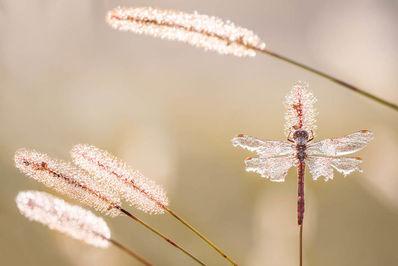 عکاس، پیتر سابول از کورواتی.