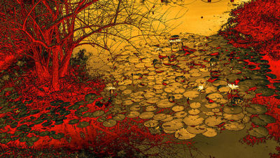 عکاس، فان اویی از چین.