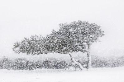 عکاس،الساندرو کاربونی از ایتالیا.