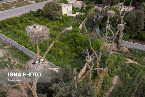 باغ لک لکهای دزفول