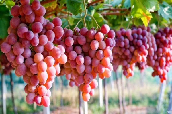 میوهای تابستانی که خوردنش مثل ضدآفتاب عمل میکند
