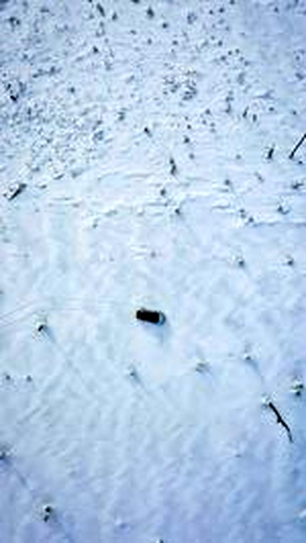 قارچهای سفیدپوش و یخی در دالنی واستوک روسیه