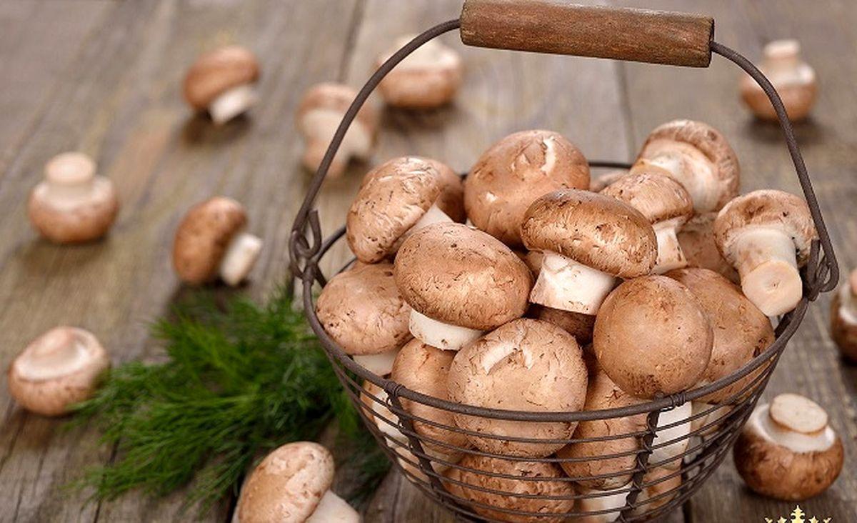 وقتی قارچ گران تر از یارانه می شود!   قارچ کیلویی۶۰ هزار تومان شد