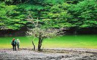 طبیعت بهشتی دریاچه چورت؛ مازندران