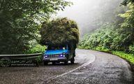 تصاویر   رویاییترین جاده جنگلی کشور که نامش را زیاد میشنوید