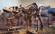 دایناسور نایاب ۶۶ میلیون ساله در پاریس