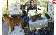صحنه ای باورنکردنی در قبرستان کرج / قدر شناسی سگ ها از حامی حیوانات بعد از مرگش + عکس