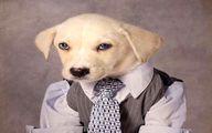 تصاویری از سگهایی که مدل میشوند!