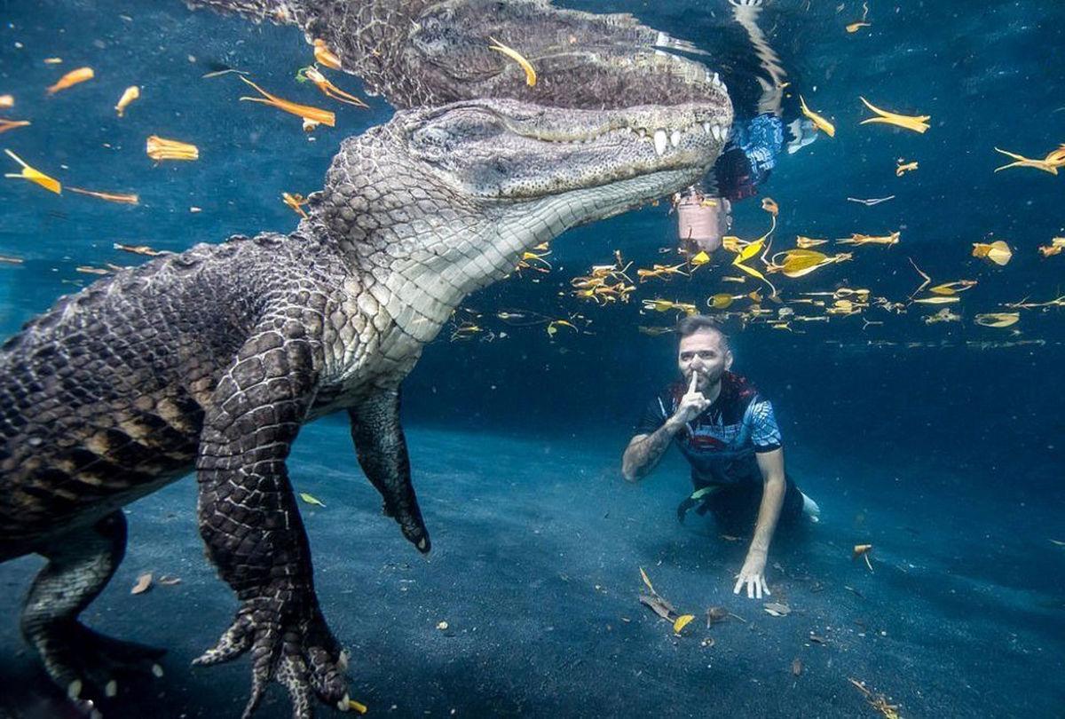 خیره کنندهترین عکس حیات وحش از غواصی در کنار تمساح