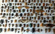 تعداد حشرات دنیا و نسبت آن با تعداد انسان