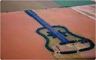 گیتار درختی / عکس