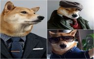سگی که کارش مدلینگ است/عکس