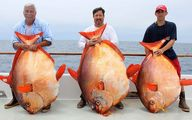 عکس /صید ماهی غول پیکر