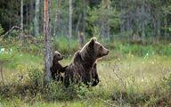 حمله خرس به کلاس درس در استان هرمزگان