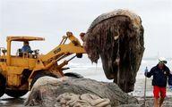 کشف موجودی عجیب با ظاهری ترسناک در ساحل + عکس