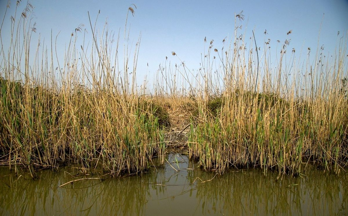 مرگ تدریجی تالاب انزلی؛ از بزرگترین زیستگاههای طبیعی ایران+عکسها