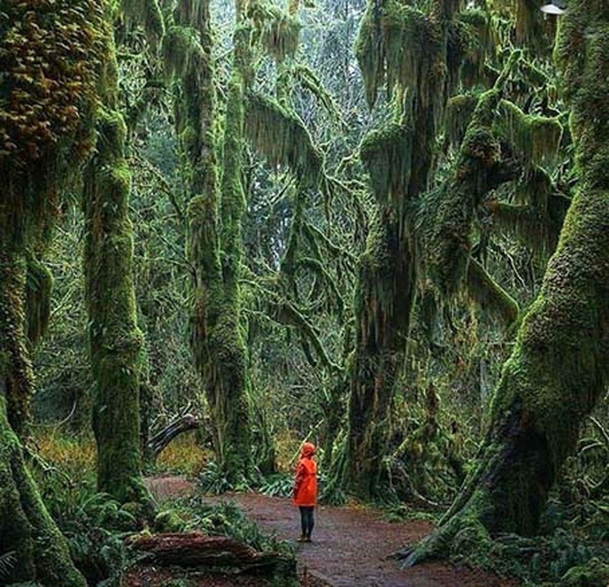 ترسناک ترین اما زیباترین جنگل دنیا عکس