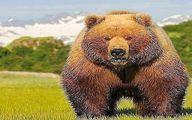 عکس:خرس کودیاک هم اندازه و قدرت تانک