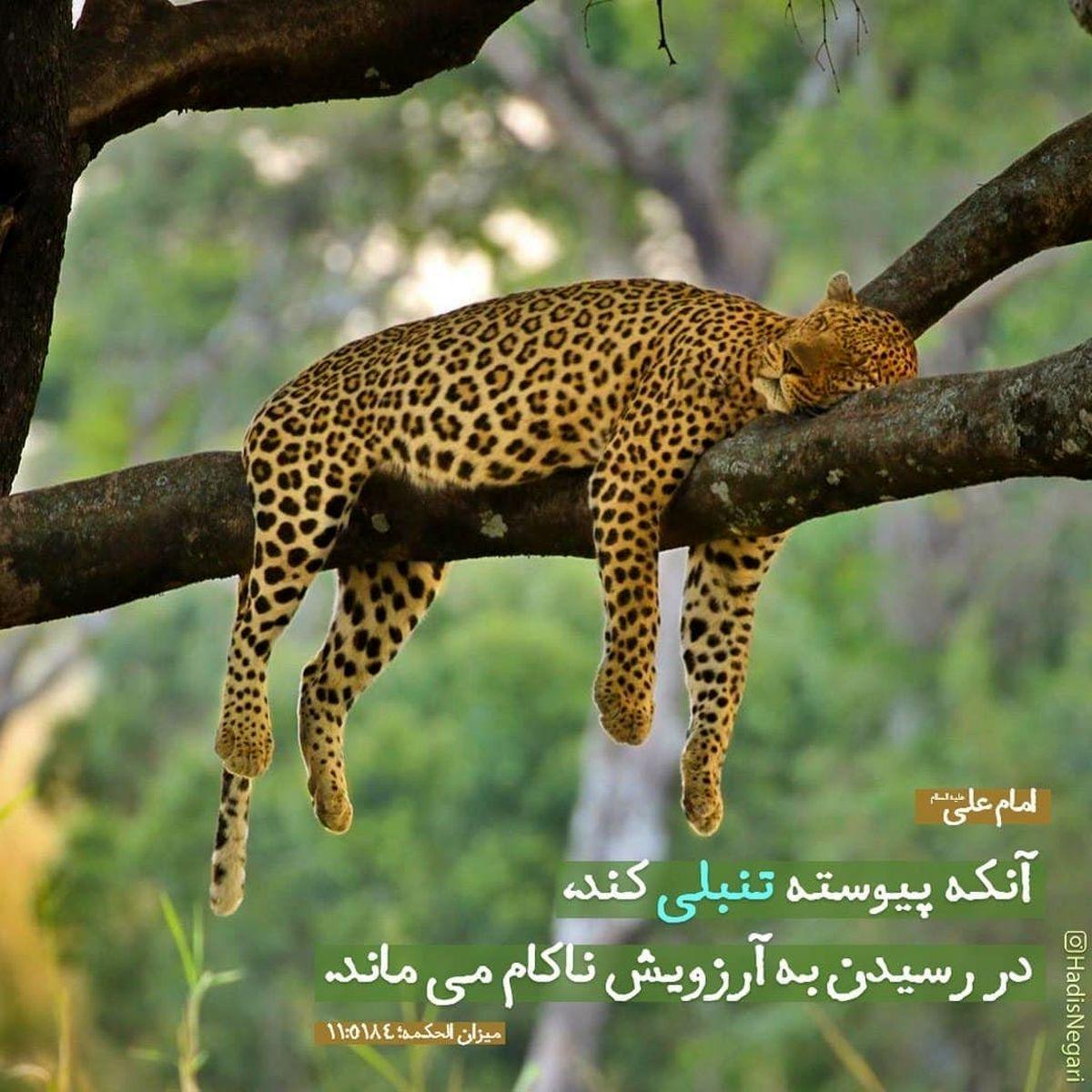 حدیث نورانی و زیبای حضرت علی (ع) در مورد تنبلی+عکس