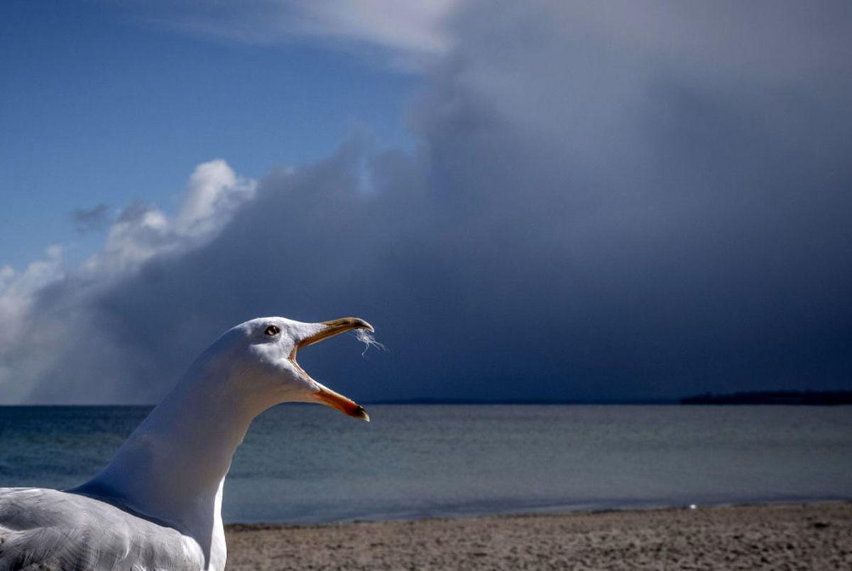 عکس دیدنی و زیبا از مرغ دریایی در آلمان