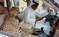 حیوانات خانگی بچه پولدارهای عرب/تصاویر