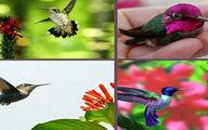 کوچکترین پرنده جهان با طول ۵۷ میلی متر و ۱٫۶ گرم وزن