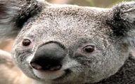 تصویر حیوانی که کوچکترین نسبت اندازه مغز به بدن را دارد