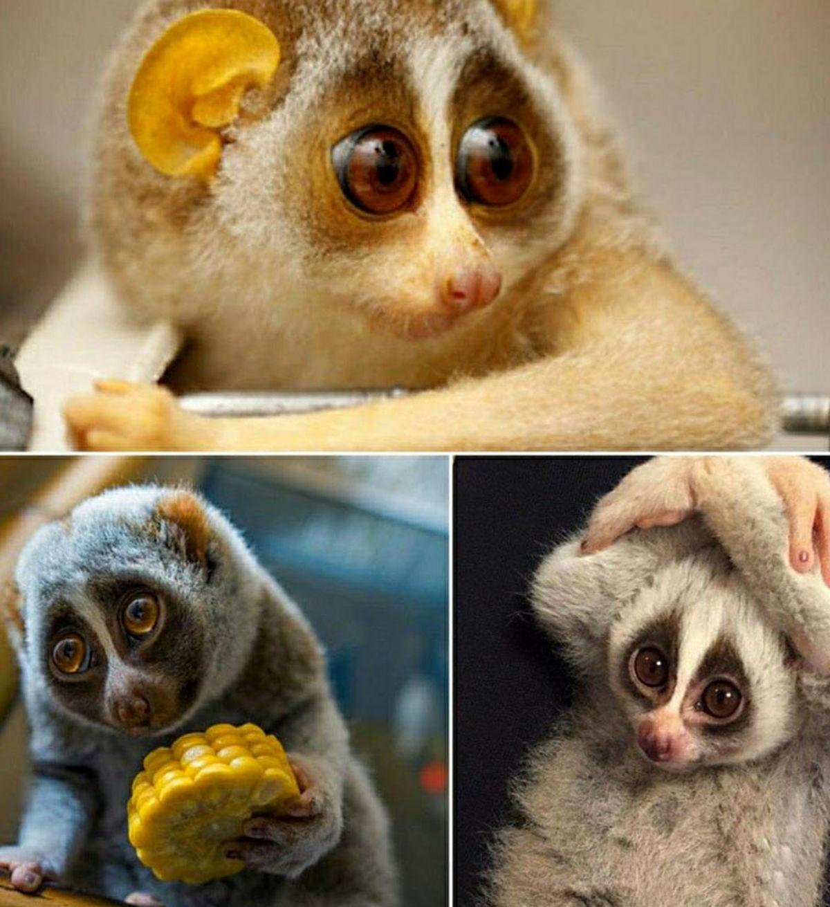 مظلوم ترین جانور دنیا که مثل انسان تسلیم می شود