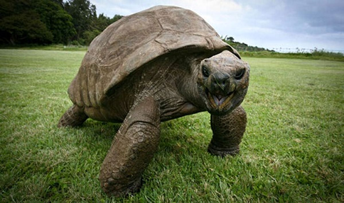 عکس دیده نشده از لاکپشت قدرتمند ۱۸۸ساله؛ پیرترین حیوان روی خشکی